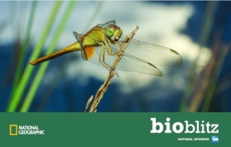 Bioblitz image dragonfly