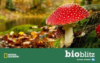 Bioblitz image mushroom