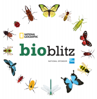 Bioblitz shirt
